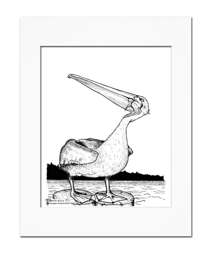 pelican_M